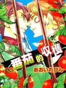番茄的收获漫画